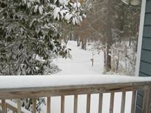 snowporch